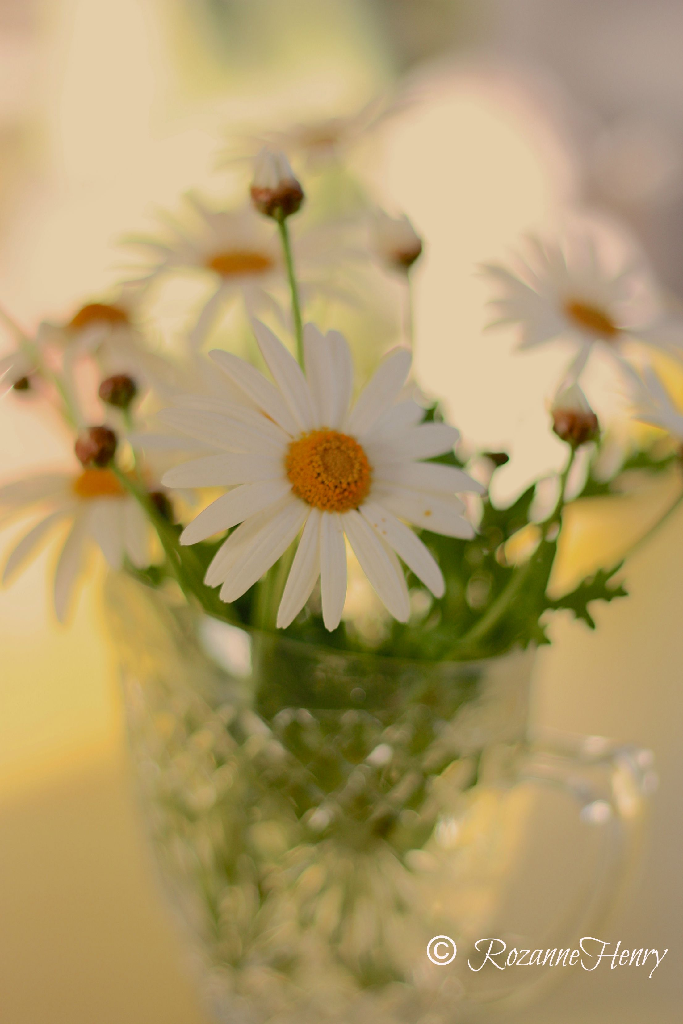 Daisies with name